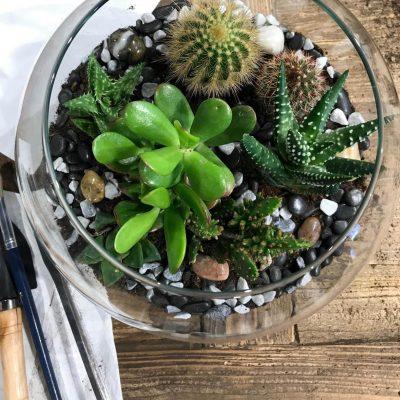 taller-terrariocactus-min