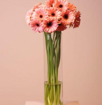 flores-gerberas-rosa-absolutaflora01