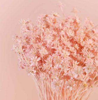 ramo-seco-hill-flower-rosa-absolutaflora02