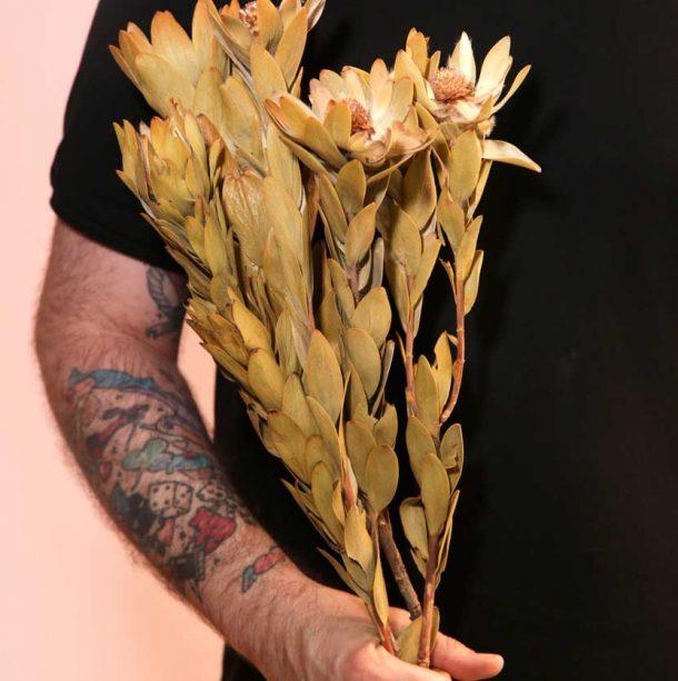 ramo-seco-nervosum-absolutaflora01