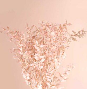 ramo-seco-ruscus-rosa-absolutaflora02